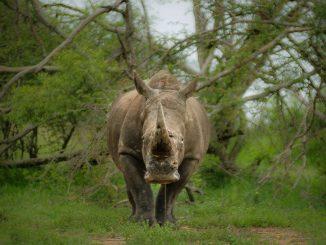 wildlife poaching