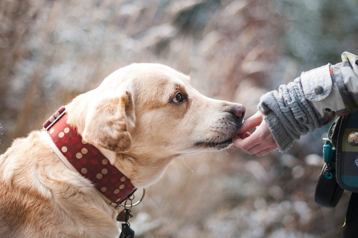 aspirin for dogs?