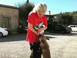 Lady Gaga's dog walker shot while her French bulldogs stolen