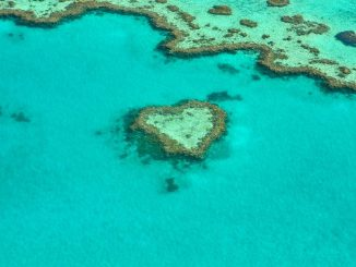 Intervention can sustain the Great Barrier Reef for more than 20 years