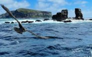 Off the Galapagos: the collapse of Darwins Arch